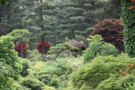 Voyage en Corée un paysage de l'île de Jejudo durant un circuit routedelacoree.com