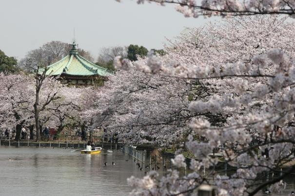 Voyage en Corée et au Japon pour la période des cerisiers en fleur avec routedelacoree.com